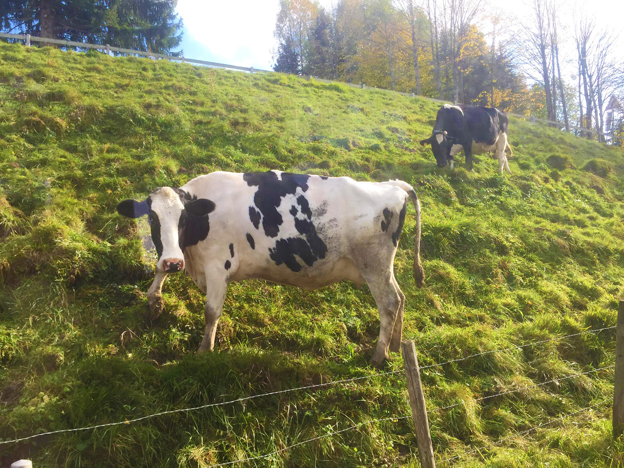 kt_2020_350_Keytours_excursions_Swisstours_gruyères_village13_2048_10